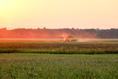 Combine harvester gathers the wheat crop at sunset 免版税图像