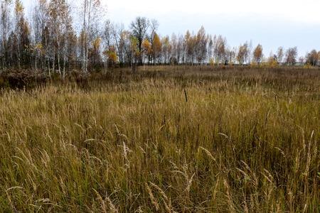 Autumn landscape. Dark clouds over the autumn forest. Yellowed grass in the field. September. Sumy region, Ukraine