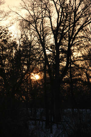 Silhouettes of trees against the background of a bright colored sunset, Beautiful texture of intertwined branches Archivio Fotografico