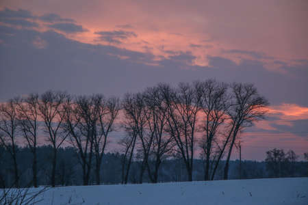 Silhouettes of trees against the background of a bright colored sunset, Beautiful texture of intertwined branches
