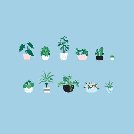 Set of flat illustrations of different houseplants
