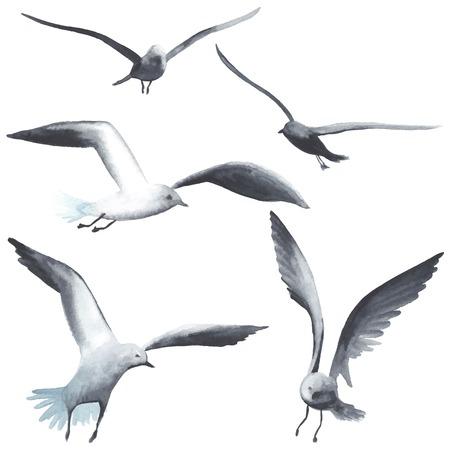 pajaro dibujo: Gaviota de la acuarela. Cada ave es por separado. Vectores
