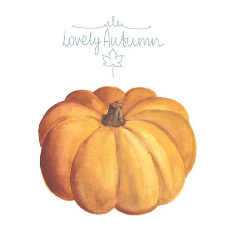 large pumpkin: Hand drawn watercolor pumpkin on white background.