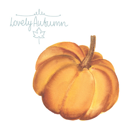 pumpkin patch: Hand drawn watercolor pumpkin on white background.