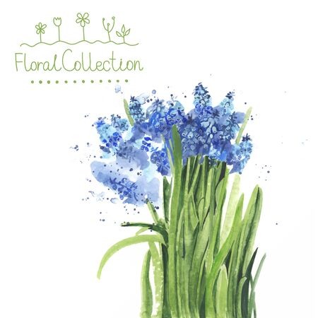 fragrant bouquet: A bouquet of watercolor muscari made in vector. Romantic greeting card. Illustration