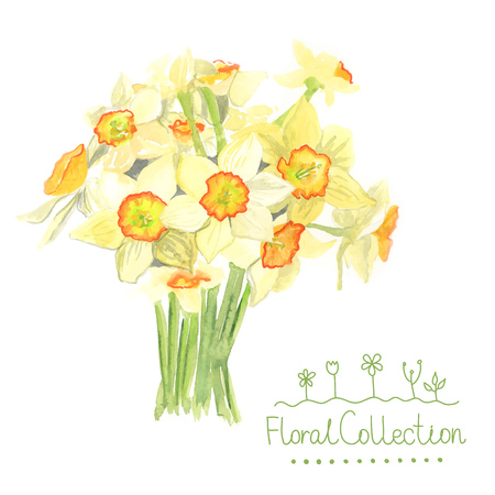 fragrant bouquet: A bouquet of watercolor narcissus made in vector. Romantic greeting card. Illustration