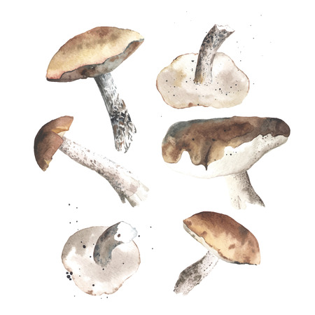 boletus: Set of watercolor mushrooms. Brown cap boletus. All object made in vector. Each one is separately.