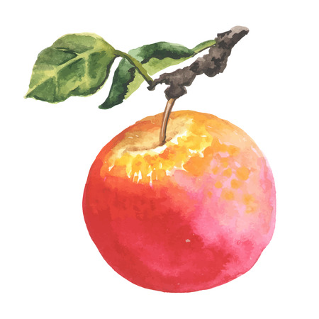 Watercolor apple with leaf. Made in vector.