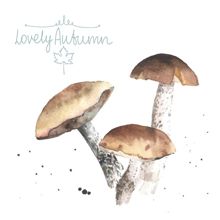 edible: Set of watercolor mushrooms. Brown cap boletus. All object made in vector. Each one is separately.