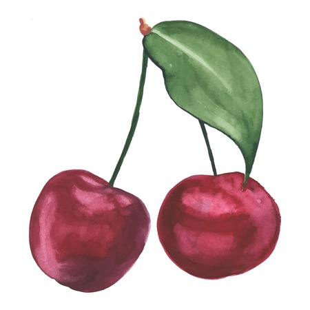 summer fruits: Hand drawn illustration of cherry. Watercolor made in vector. Illustration