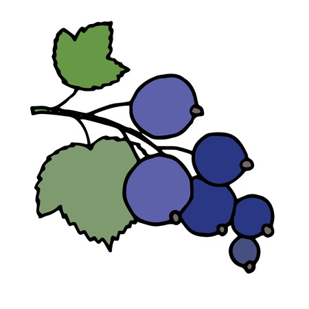 delicatessen: Hand drawn vector illustration of blackcurrant with black outline.