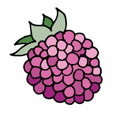 wild berry: Hand drawn vector illustration of raspberry with black outline.