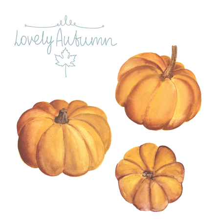 pumkin: Set of watercolor pumpkins on white background.