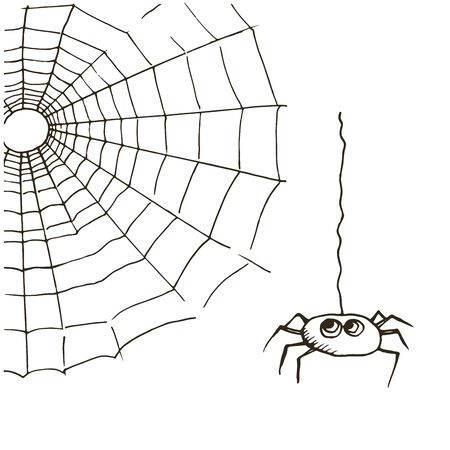 designe: Vector spider web and spider on a white background.