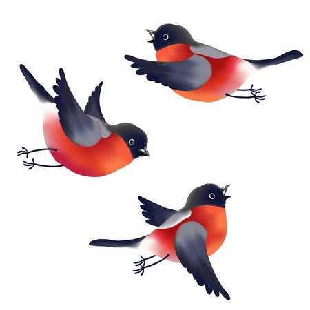 oiseau dessin: Collection d'images colorées diffirent de Bouvreuils isolé sur fond blanc. Vector illustration