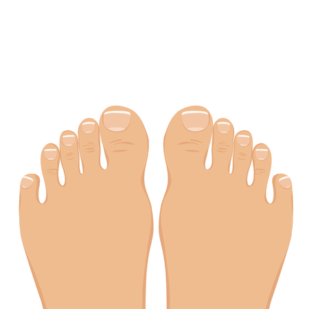 human toe: illustration of a woman barefoot. Top view. The feet with a neat pedicure isolated on white.