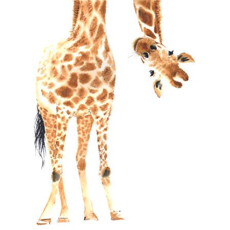 jirafa realista hecha en acuarela. Mano dibujado illistration