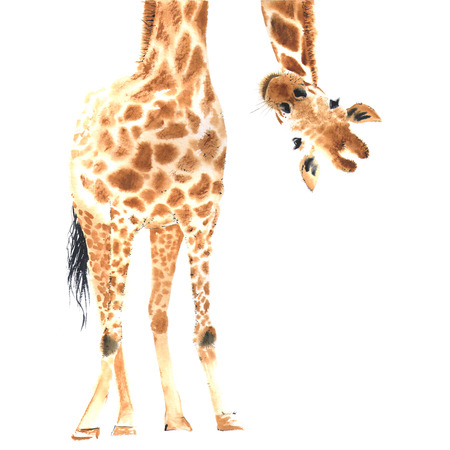 Realistic giraffe made in watercolor. Hand drawn illistration