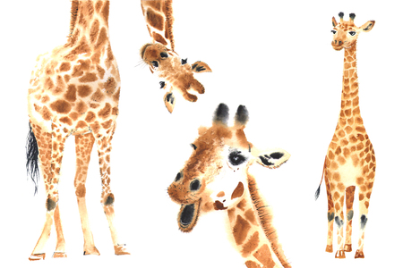 Set of watercolor giraffes Фото со стока