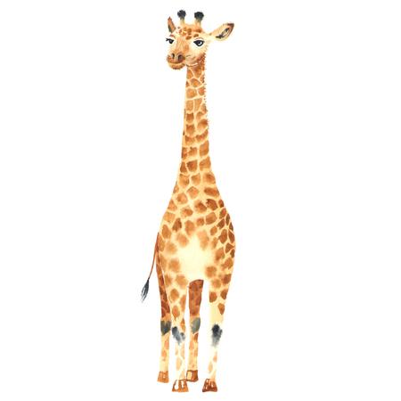 Watercolor baby giraffe. Illustration