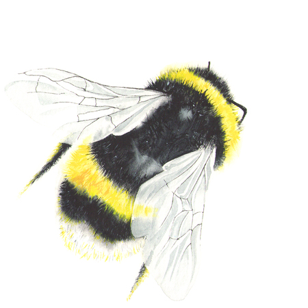 Watercolor bee isolated on white Фото со стока