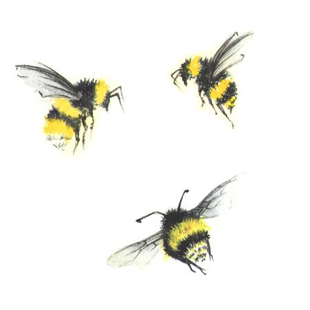 3 kleine Aquarellbienen Standard-Bild - 75433198