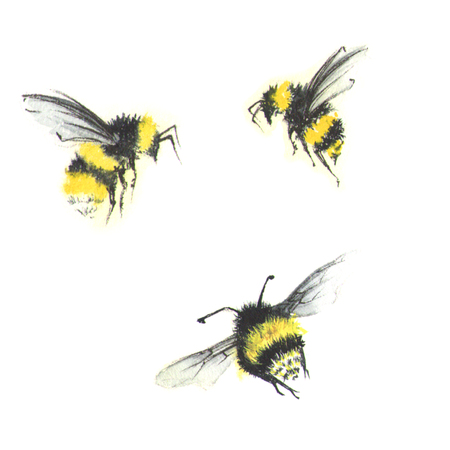 3 kleine waterverfbijen