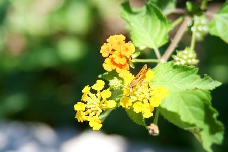 naturaleza: Florecitas