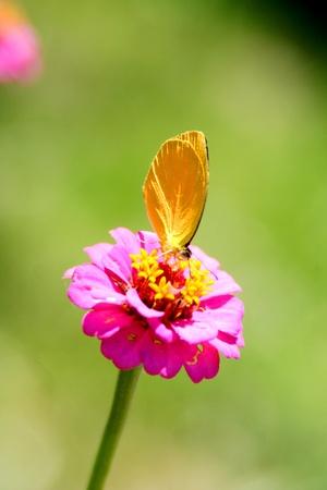 Flor con Mariposa 版權商用圖片