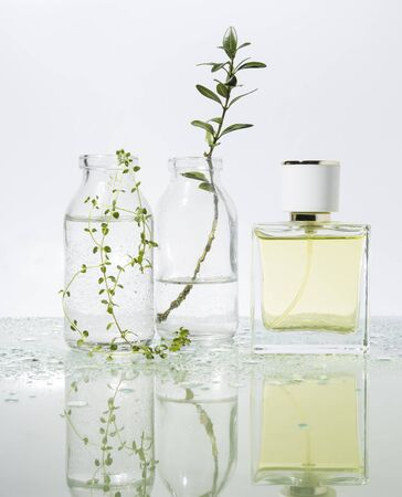 manufacturer of perfume. Several glass vessels with perfumed water and flowers on a mirrored table. Front view and copy space