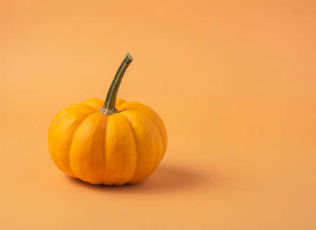 small decorative multicolored pumpkin  on an orange background. Front view and copy space