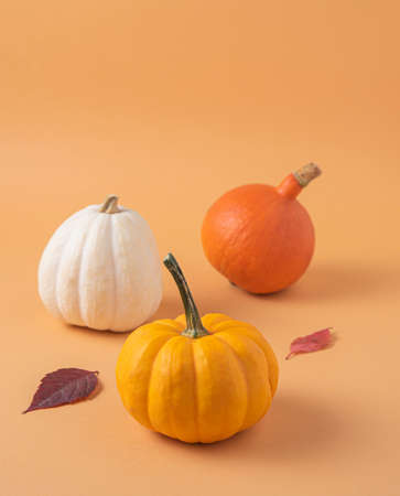 Three small decorative multicolored pumpkins and autumn leaf on an orange background. Copy space 版權商用圖片