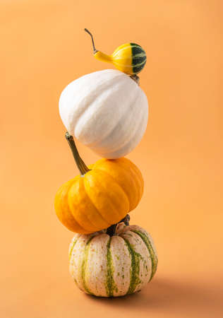 several small decorative multicolored pumpkins on an orange background. Front view