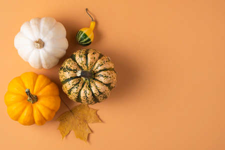 several small decorative multicolored pumpkins and maple on an orange background. Top view and copy space
