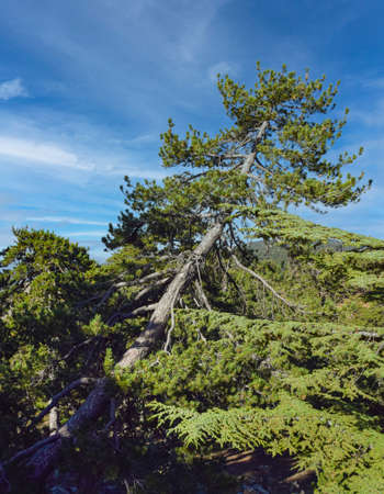 Beautiful mountain landscape with tree in Cyprus on a Sunny summer day Banque d'images