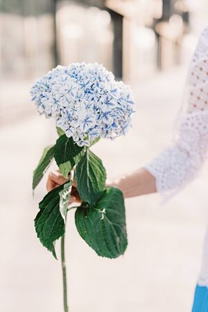A big flower from a lot of small flowers white and blue. Beautiful flowers in the hands of a florist