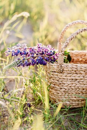 The flower branch with purple little buds protrudes from a braided basket. Basket with field flowers among grass
