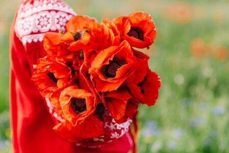 Maki, beautiful red flowers with a gentle flavor and thin petals in women hands. Ukrainian motives - red flowers and girl in embroidery 스톡 콘텐츠