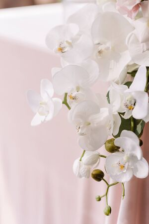 The table of the groom and bride is decorated with fresh white orchids. Big luxury branch of natural orchid on pink tablecloth table Reklamní fotografie