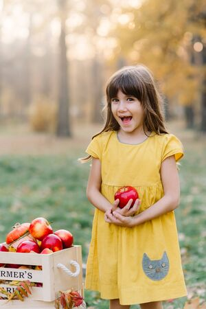 Child picking apples on farm in autumn. Little girl playing in apple tree orchard. Healthy nutrition. Cute little child eating red delicious fruit. Harvest Concept.