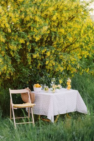 Picnic outdoors. Preparations for the picnic. Garden decoration with lemons and mint lemonade jar. Relax concept 스톡 콘텐츠