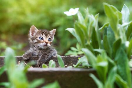 Tabby young catTabby young cat or kitten in green grass or kitten in green grass. Sunsent light, copy space