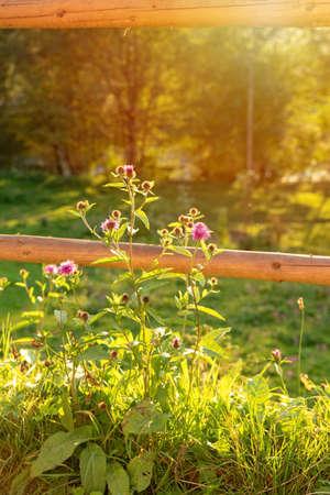 Nature green blurred background, bokeh. Beautiful grass in sunlight. Indian summer sunlight sunset mood