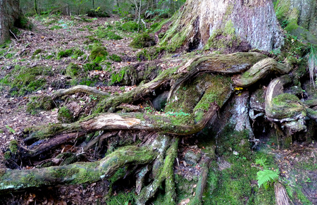 Tree with twisted roots