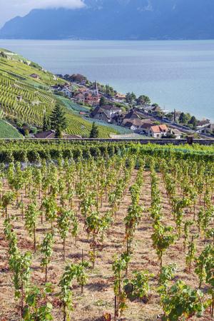 Vineyards of the Lavaux region on Lake Geneva (or Lake Geneva), Switzerland