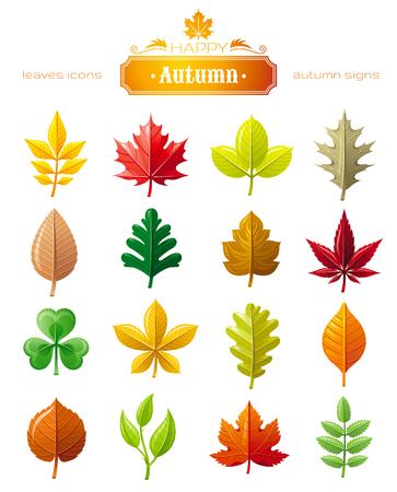 Hojas y flores vector conjunto de iconos para el concepto natural, estacional, diseño ecológico. símbolo abstracto de la hoja del otoño - castaño, roble, arce, arce, el serbal, tilo, fresno, cerezo, trébol, brote, hoja de uva de espino