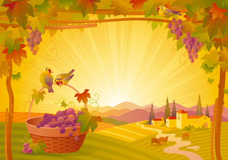 vineyard sunset: Vector thanksgiving illustration, beautiful autumn landscape on sunny modern elegant background, vineyard, copy space. Countryside fall farm symbol, grapes fruit, picnic basket, goldfinch birds