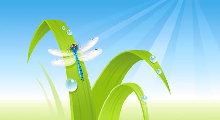 Spring dragonfly banner border. Ecological concept. Environment friendly vector illustration. Summer landscape. Green grass, blue sky, insect. Springtime nature. Flat greeting card background design Illustration