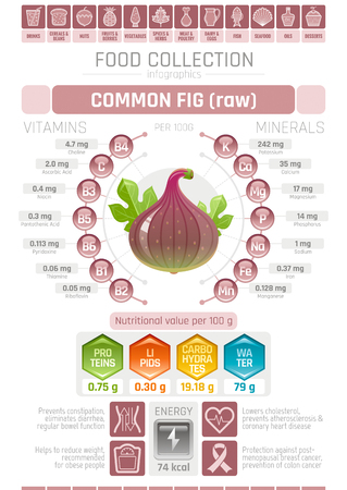 Food infographics poster, fig fruit vector illustration. Healthy eating icon set, diet design elements, vitamin mineral supplement chart, protein, lipid, carbohydrates, diagram flat flyer banner