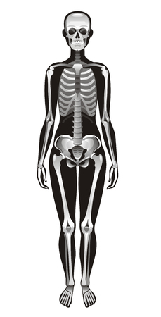 Vector illustration, isolated white background. Realistic human skeleton symbol, 3d female figure with skul, bones, rib. Cartoon didactic health poster template. Flat banner, medical sign